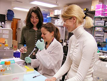 MBARI microbial oceanographer Alexandra Worden (left), along with graduate students Melinda Simmons (middle), and Marie Cuvelier (right) work on Micromonas algae in their laboratory at the Monterey Bay Aquarium Research Institute. Image: Kim Fulton-Bennett (c) 2009 MBARI