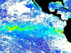 Satellite image of the 1998 equatorial algal bloom. Image: NASA SeaWIFS project