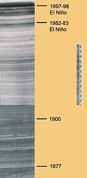 This section of a sediment core from the Santa Barbara Channel shows the annual layers of sediments laid down each year. The scale to the right of the core is marked in centimeters. Image: (c) 2005 David Field