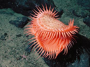 Image credit: Image: (c) 2002 MBARI / NOAA