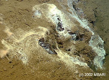 Photo: (c) 2002 MBARI