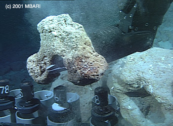 MBARI's remotely operated vehicle Tiburon collects a rock sample from a drowned coral reef off the northwest coast of Hawaii during MBARI's 2001 Hawaii expedition.