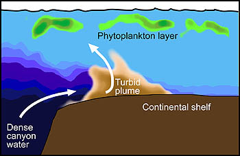 This simplified drawing shows the southern edge of Monterey Canyon where Ryan performed a two-dimensional AUV survey during the MUSE experiment. Cold, dense water can be seen emerging from the canyon, while a turbid plume extends from the sea bottom toward a layer of phytoplankton just below the sea surface. Image: (c) 2005 MBARI