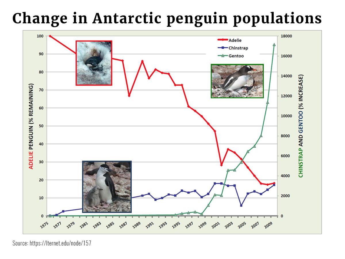 Graphs Penguin Pop