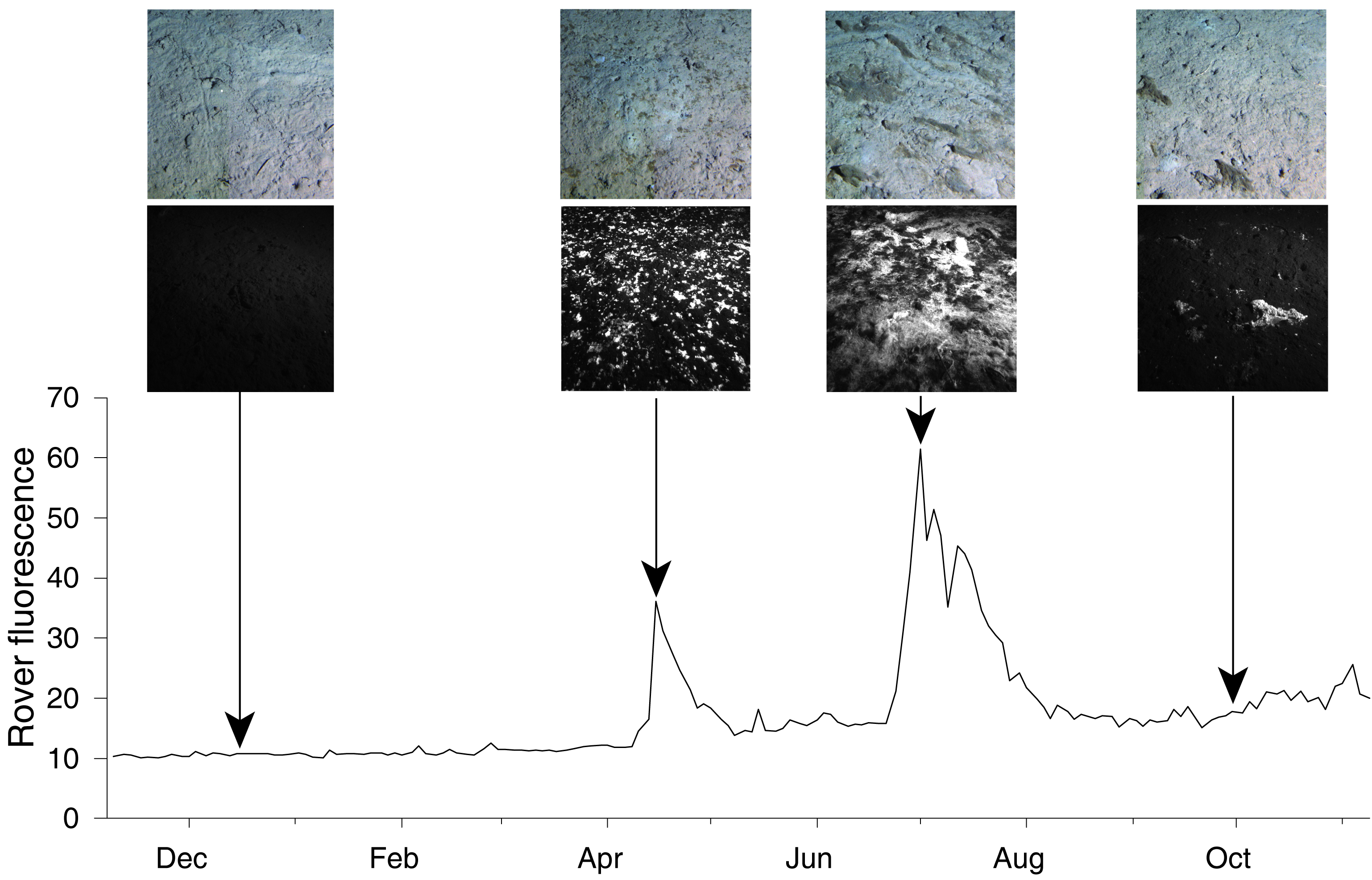 Benthic Rover data collected from Station M showing detritus pulses with fluorescence images