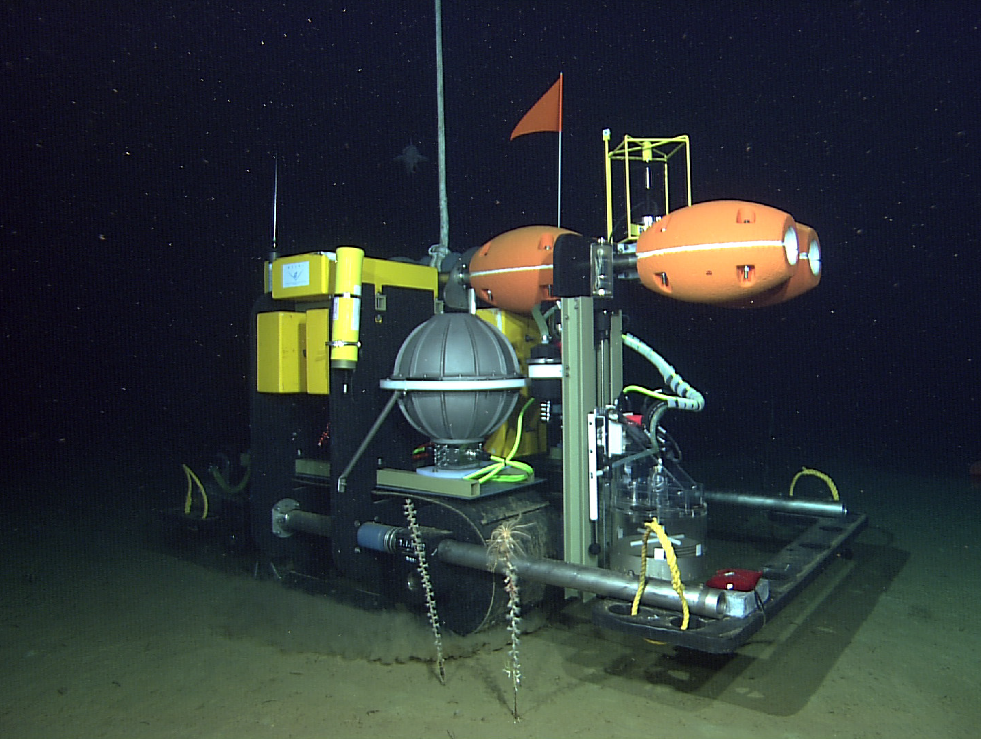 The Benthic Rover on the seafloor. This image is from the Rover's trial run while it was connected to power from a cabled observatory.