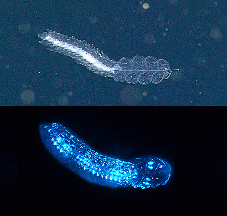 new study shows that three quarters of deep sea animals make their