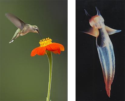 Humingbird and Mollusc
