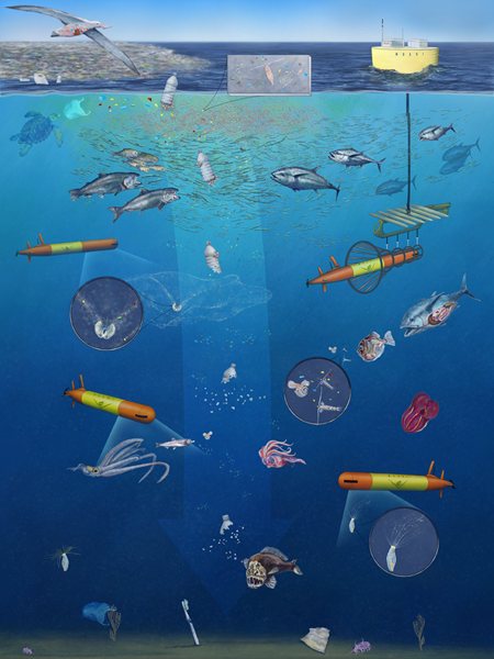 A plastic bottle entering the ocean at the surface starts to break down as it sinks and pieces of the bottle are eaten by different animals as the plastic sinks toward the seafloor.