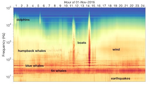 A colorful image showing a plot of frequency over time, with labels for whales, dolphins, boats, wind, and earthquakes.